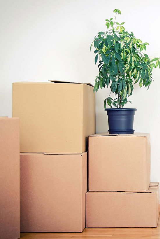 Moving Tips   Peluso Movers